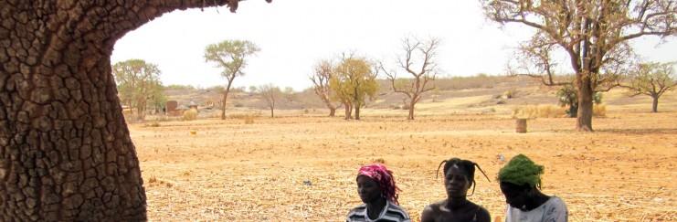 Foto aus der Region des Projekts zur Überwindung der Mädchenbeschneidung. Drei Monate vor der nächsten Regenzeit wächst auf dem Boden schon nichts mehr, und viele Bäume haben kaum noch Blätter. (Foto: D. Grünholz)